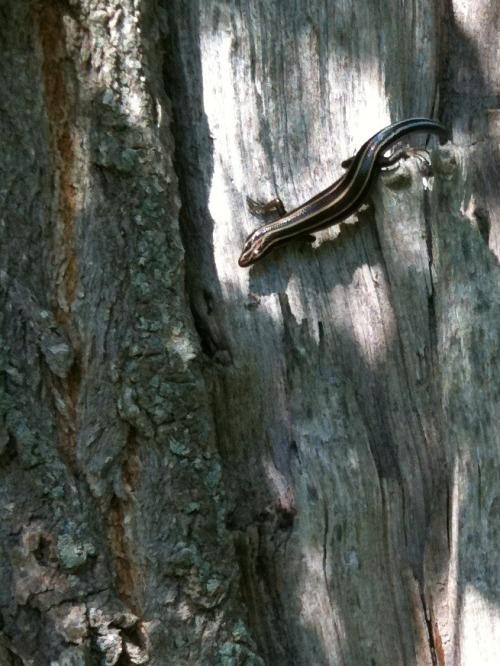 Img_2191-cropped_lizard