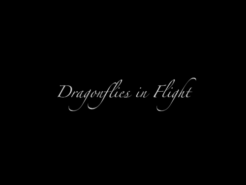 Difs-lr-slideshow_title-screen