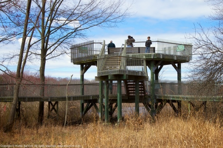 The observation tower at Huntley Meadows Park