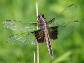 Photo 1: Dragonfly is excreting.