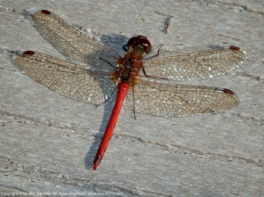Photo 1. Male 1.