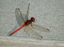 Photo 1. Male 3.