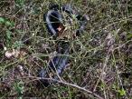 Eastern Ratsnake (Pantherophis alleghaniensis)
