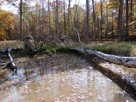 Vernal pool at Huntley Meadows Park