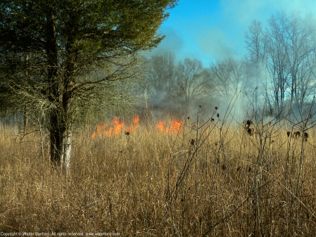 A controlled burn at Huntley Meadows Park, Fairfax County, Virginia USA. This meadow is located near the terminus of the Hike-Bike Trail.