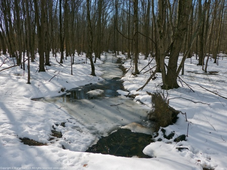 Looking downstream along a creek that crosses the Hike-Bike Trail at Huntley Meadows Park, Fairfax County, Virginia USA.