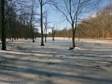 "A view of the ""Mystery Pool,"" Huntley Meadows Park, Fairfax County, Virginia USA."