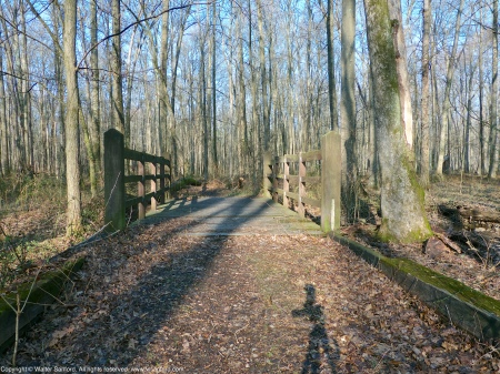 "The ""Bridge to Nowhere,"" located along an informal trail at Huntley Meadows Park, Fairfax County, Virginia USA."
