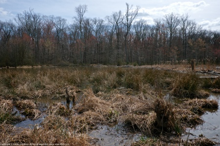 A beaver lodge and secondary structure spotted along Barnyard Run at Huntley Meadows Park, Fairfax County, Virginia USA.