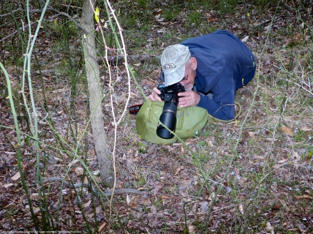 Michael Powell photographing an Eastern Gartersnake (Thamnophis sirtalis sirtalis) at Huntley Meadows Park, Fairfax County, Virginia USA.